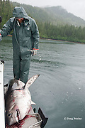 fishing guide and dead salmon shark, Lamna ditropis, Prince William Sound, Alaska, U.S.A.