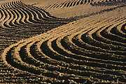 Freshly planted wheat field.... .........