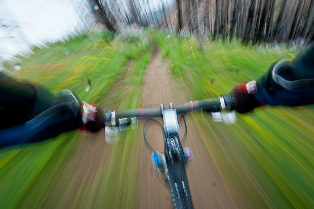 Mountain biker flies down Sun Valleys Baldy Mountain trail system creating a motion blur through wildflowers at warp speed. MR.  Licensing and Open Edition Prints