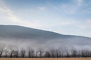 Salisbury Mills, New York - Morning fog moves behind the trees at Clove Brook Farm  on Feb. 21, 2018. Schunnemunk Mountain is in the background.