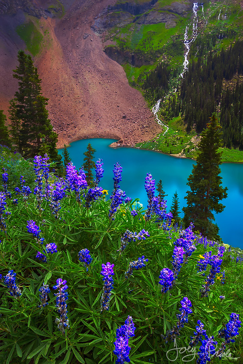 Lush, mineral-rich mountainsides filled with wildflowers and cascading streams above a bright blue alpine lake give this scene from Colorado a decidedly tropical feel.