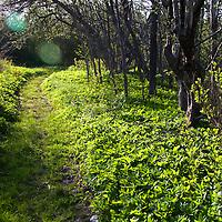 North America, Canada, Nova Scotia, Guysborough. Spring sun lights a portion of the Trans-Canada trail through Guysborough.