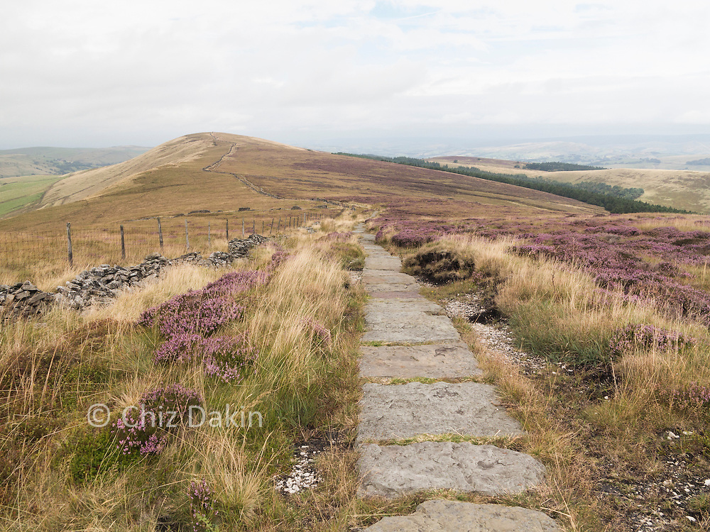 In summer flowering heather adds a purple blush to the wide grassy ridgeline from Shining Tor to Pym Chair