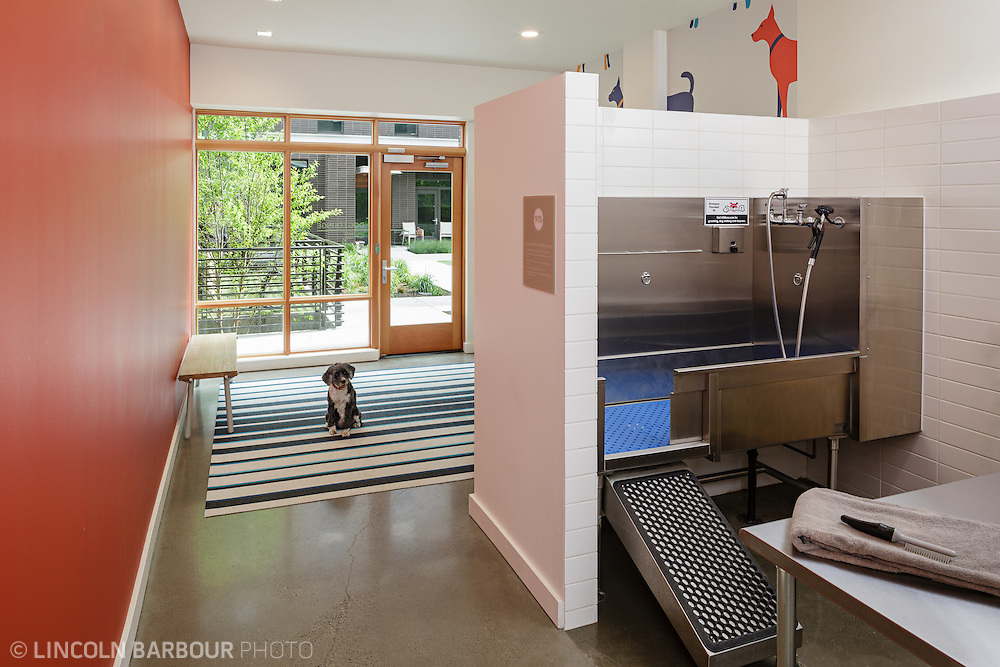A dog waits to be washed in this private dog washing station inside of an upscale apartment building.