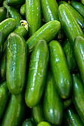 A pile of fresh, ripe cucumbers