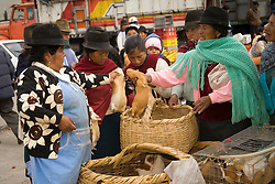 """South America, Ecuador, Saquisili, woman buing guinea pigs (""""cuy"""") at weekly food and crafts market which draws indigenous people and tourists from surrounding villages"""