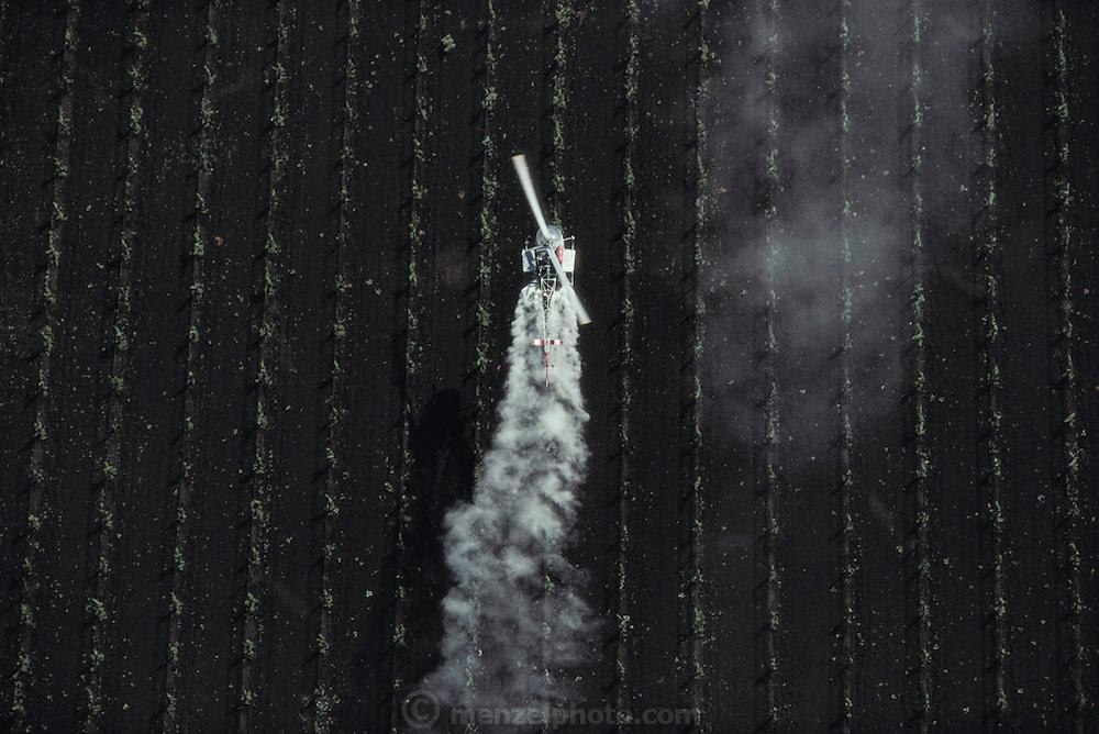 Crop dusting. Spraying wine grape vineyards with sulphur in Napa Valley, California, USA.