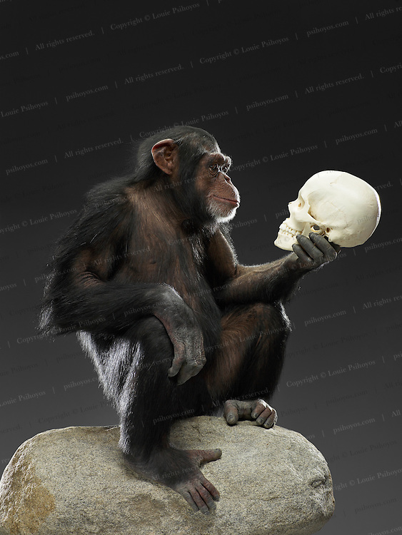 Chimp and Skull