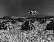 Grain in shocks near Toledo, Lewis County. The shocks and Mount St. Helens, whose graceful lines resemble those of Fujiyama, gave the scene the appearance of a Japanese landscape. (Josef Scaylea / The Seattle Times, 1968)
