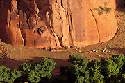 Morning light on sheep and pen in Canyon de Chelly, Canyon de Chelly National Monument, Arizona.