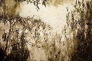Autumn reflections // Herfstreflecties in het water.