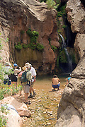 People photograph Elves Chasm waterfall in Grand Canyon National Park, Arizona, US; Tom Robinson, Tom Bailey, Maia Nelson, Jenn Sonsnowiski, Ned Cooper,  Tricia Cronin in photo (MRs on file)