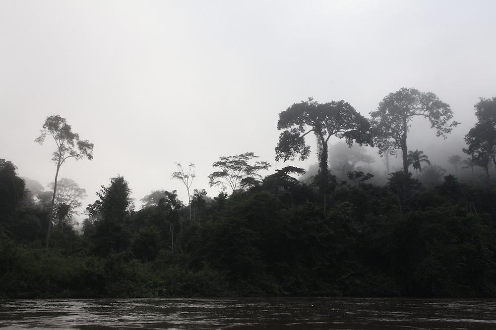 Parauapebas_PA, Brasil.<br /> <br /> Floresta Nacional de Carajas (Flona). Castanheira (Bertholletia excelsa) na floresta amazonica, Para.<br /> <br /> The Carajas National Forest. The Brazil nut tree (Bertholletia excelsa) in the Amazon rain forest, Para.<br /> <br /> Foto JOAO MARCOS ROSA / NITRO