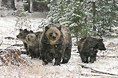 Tours: Yellowstone & Tetons in Fall
