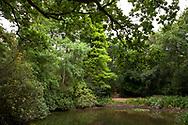 the nature reserve de Manteling near Oostkapelle on the peninsula Walcheren, Zeeland, Netherlands.<br /> <br /> im Naturschutzgebiet de Manteling bei Oostkapelle auf Walcheren, Zeeland, Niederlande.
