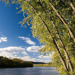 Silver maple trees lean over the Connecticut River at the Sawyer Farm in Walpole, Connecticut.