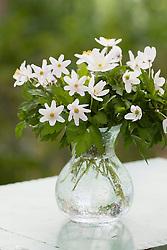 Anemone nemorosa in a clear glass vase