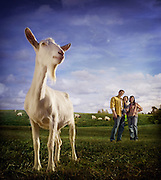 A dairy goat stands in a field  in front of its farming family owners.