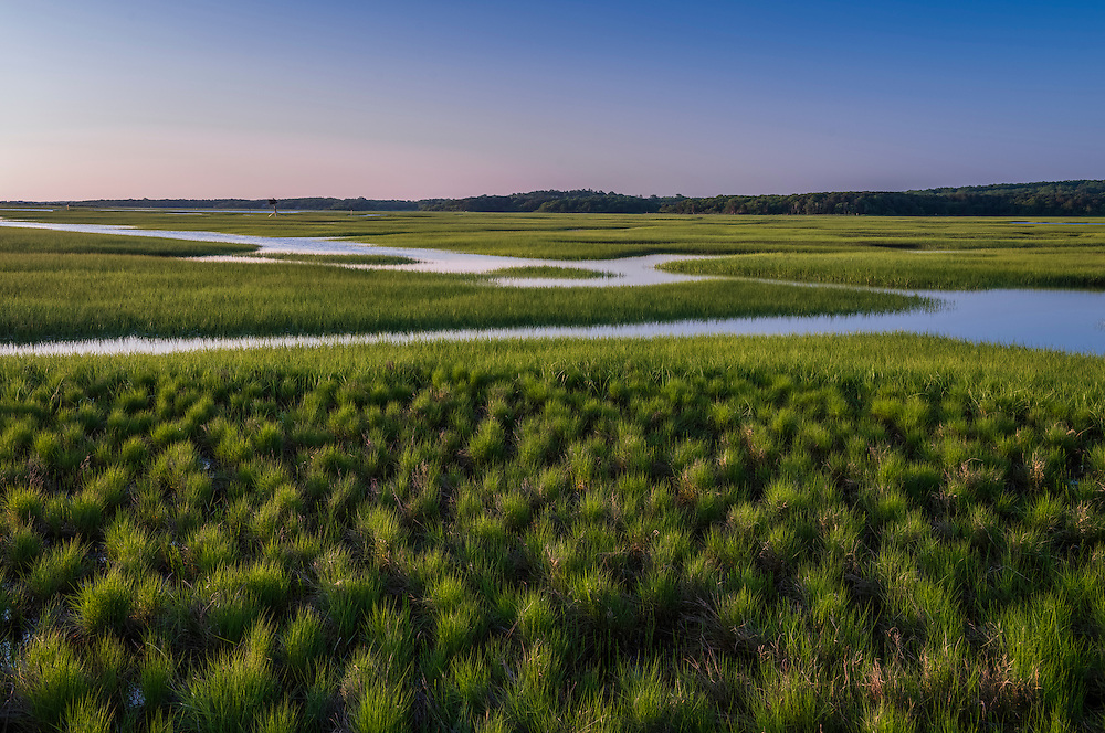 First light on grass tufts and water patterns through marsh area, Sandwich, MA