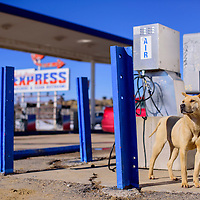 012215       Cable Hoover<br /> <br /> A stray dog sniffs the air out side the Red Mesa Express station in Yatahey Thursday.