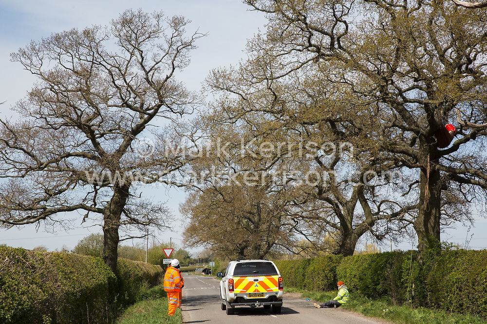 Quainton, UK. 26th April, 2021. Security guards monitor a Stop HS2 activist occupying a mature oak tree on the opposite side of the road in order to try to prevent it and two other oak trees from being felled to construct a temporary access road for the HS2 high-speed rail link. Environmental activists continue to oppose the controversial HS2 infrastructure project from a series of protection camps along its Phase 1 route between London and Birmingham.