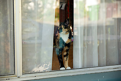 Zelda the cat peers out the front window of her home, Wednesday, April 1, 2020 in Oakland, Calif. (Photo by D. Ross Cameron