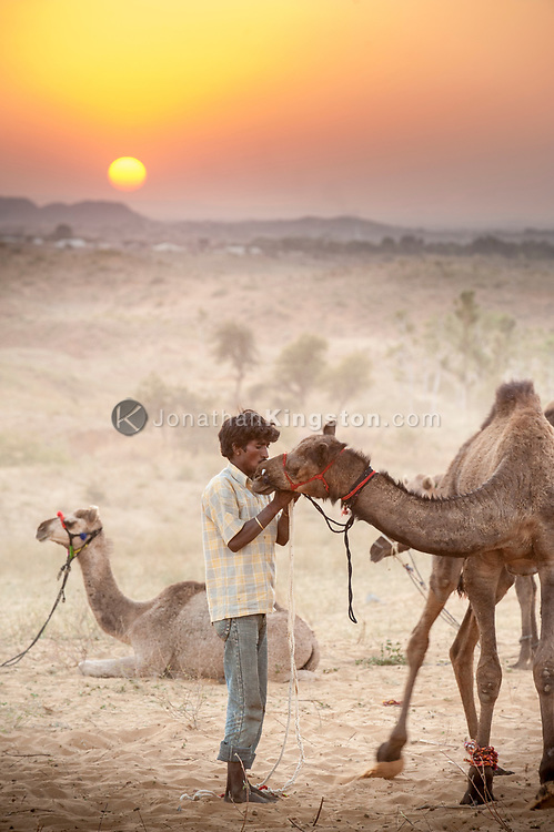 A camel and nomad in the desert at sunset, India.
