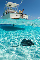 """Tourists interact with Southern Stingrays at World Famous site, """"Stingray City Sandbar""""<br /> <br /> <br /> Shot in Cayman Islands"""