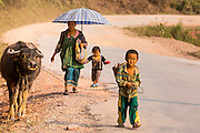 15 MARCH 2013 - ALONG HIGHWAY 13, LAOS:  A family walks up Highway 13, leading their water buffalo to new fields. The paving of Highway 13 from Vientiane to near the Chinese border has changed the way of life in rural Laos. Villagers near Luang Prabang used to have to take unreliable boats that took three hours round trip to get from the homes to the tourist center of Luang Prabang, now they take a 40 minute round trip bus ride. North of Luang Prabang, paving the highway has been an opportunity for China to use Laos as a transshipping point. Chinese merchandise now goes through Laos to Thailand where it's put on Thai trains and taken to the deep water port east of Bangkok. The Chinese have also expanded their economic empire into Laos. Chinese hotels and businesses are common in northern Laos and in some cities, like Oudomxay, are now up to 40% percent. As the roads are paved, more people move away from their traditional homes in the mountains of Laos and crowd the side of the road living off tourists' and truck drivers.   PHOTO BY JACK KURTZ