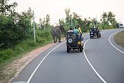 Wild elephants crossing a main road near Habarana, Anuradhapura District, Sri Lanka, Asia