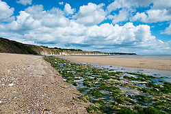 A fresh green strip of abandoned seaweed left behind by the receeding tide, looking away from Bridlington town along North Beach West Yorkshire England<br /> <br />  4 August 2016<br />  Copyright Paul David Drabble<br />  www.pauldaviddrabble.photoshelter.com