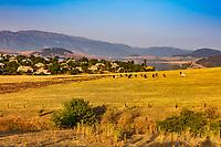 cattle in the higlands plain landscape of Lorri region province near Hnevank Armenia eastern Europe