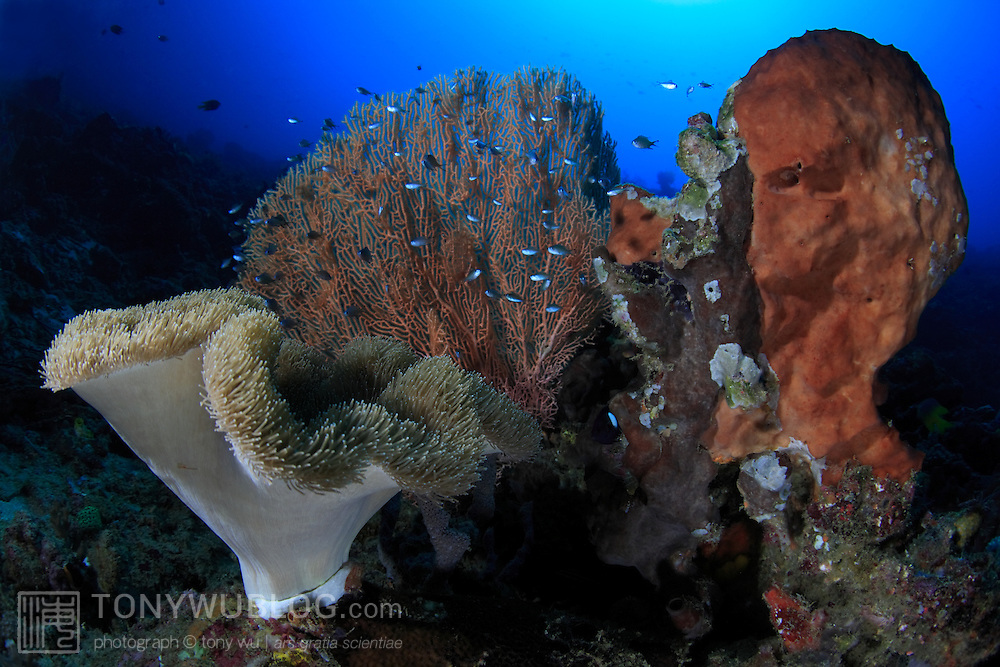 Coral and sponge formation on the outer reef in Ambon, Indonesia