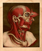 "Human Anatomy The ""Essai d'Anatomie"" was produced by Gautier D'Agoty in 1745 in Paris, France. It is a remarkably detailed atlas of the head, neck, and shoulder areas of the human body with explanatory text in French. The anatomical images were based on human cadavers dissected by Joseph Duverney (1) and produced using the mezzotint method of engraving and printing. Mezzotint color engraving printing was invented by Jaques Christophe Le Blon in 1719. Mezzotint (from the Italian phrase ""mezza tina"" or ""half tone"") prints are produced by engraving a metal plate with numerous small holes that hold ink. When used to make a print, the engraved plate produces large areas of subtle shaded color tones. Since the mezzotint technique is quite labor-intensive, it fell out of favor by the 20th century, although it is still utilized by some artists. Most often used to reproduce paintings by famous artists, mezzotint printing was rarely used for original works of art, making the ""Essai d'Anatomie"" a work of great scientific and artistic significance."