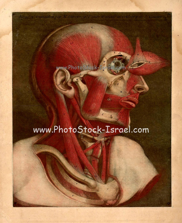 """Human Anatomy The """"Essai d'Anatomie"""" was produced by Gautier D'Agoty in 1745 in Paris, France. It is a remarkably detailed atlas of the head, neck, and shoulder areas of the human body with explanatory text in French. The anatomical images were based on human cadavers dissected by Joseph Duverney (1) and produced using the mezzotint method of engraving and printing. Mezzotint color engraving printing was invented by Jaques Christophe Le Blon in 1719. Mezzotint (from the Italian phrase """"mezza tina"""" or """"half tone"""") prints are produced by engraving a metal plate with numerous small holes that hold ink. When used to make a print, the engraved plate produces large areas of subtle shaded color tones. Since the mezzotint technique is quite labor-intensive, it fell out of favor by the 20th century, although it is still utilized by some artists. Most often used to reproduce paintings by famous artists, mezzotint printing was rarely used for original works of art, making the """"Essai d'Anatomie"""" a work of great scientific and artistic significance."""