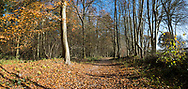 Ramridge Copse, Ragged Appleshaw, Andover Hampshire - Autumn