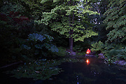 A young man holding a flashlight sits at the edge of a small pond at dusk surrounded by lush vegetation in the Washington Park Arboretum in Seattle, Washington. The city park, a living museum home to over 20,000 plant species from around the world, celebrates its 75th anniversary this year.