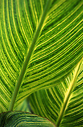 Frond Detail, Art Photo, Longwood Gardens, Kennett Square, Chester Co., PA