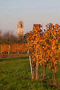 Autumn colours in the vineyard in late afternoon evening sunshine, red, brown, yellow leaves, view of the church tower in the neighbouring village Conne de Labarde Domaine Vignoble des Verdots Conne de Labarde Bergerac Dordogne France