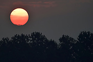 Sunrise with trees over the Yangtze river, Hubei Tian'ezhou Milu National Nature Reserve, Shishou, Hubei, China