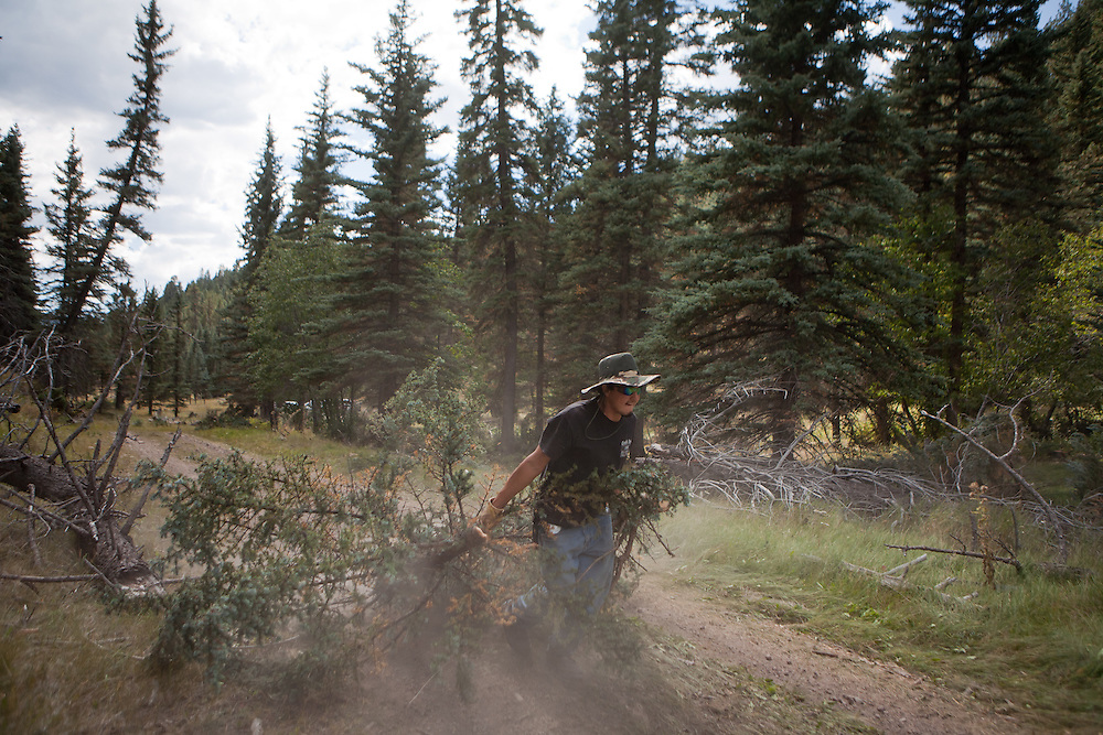 A worker carries a newly removed tree on a dirt road in the Valles Caldera. Santa Clara Pueblo has received $6,513,000 in stimulus funds to promote healthy forests and reduce hazardous fuels..