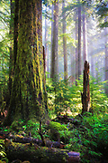Forest at Sol Duc Falls in Olympic National Park, Washington