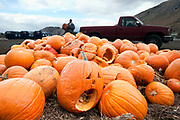 PRICE CHAMBERS / NEWS&GUIDE<br /> Kirby Kortum prepares to toss another pumpkin on the pile at the Great Pumpkin Round-Up on Saturday. Terra Firma Organics and Teton County Integrated Solid Waste and Recycling team up for the event at Teton County Fairgrounds. Each pumpkin dropped off is hauled to the transfer station, where the gourds are processed into compost over the course of a year. Terra Firma Organics sells its finished compost at the trash transfer station, as well as at local gardening retailers.