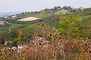 Colline e vigneti nei pressi di Neive (cuneo) The vineyards in the Langhe
