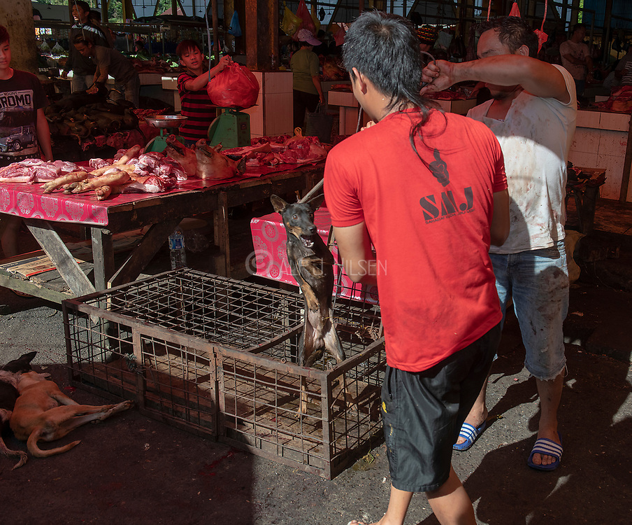 Picking dog for slaughter at Tomohon extreme market, Minahasa, north Sulawesi, Indonesia.