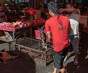 Picking dog for slaughter at Tomohon extreme market, Minahasa, north Sulawesi, Indonesia.