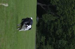 Eddie Sander with his Dogs Jackson and Inka<br /><br />18 June 2004<br /><br />Copyright Paul David Drabble<br /> [#Beginning of Shooting Data Section]<br />Nikon D1 <br /> Focal Length: 100mm<br /> Optimize Image: <br /> Color Mode: <br /> Noise Reduction: <br /> 2004/06/18 09:48:57.6<br /> Exposure Mode: Manual<br /> White Balance: Auto<br /> Tone Comp: Normal<br /> JPEG (8-bit) Fine<br /> Metering Mode: Center-Weighted<br /> AF Mode: AF-C<br /> Hue Adjustment: <br /> Image Size:  2000 x 1312<br /> 1/250 sec - F/6.3<br /> Flash Sync Mode: Not Attached<br /> Saturation: <br /> Color<br /> Exposure Comp.: 0 EV<br /> Sharpening: Normal<br /> Lens: 80-200mm F/2.8<br /> Sensitivity: ISO 200<br /> Image Comment: <br /> [#End of Shooting Data Section]