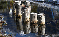 SYMBOLBILD - Seefeld, Gschwadtkopf, erster Reif, Seekirchl, Reif, Reife, Kalt, Kälte, Jahreszeit, November, Schnee, wasser // Seefeld, Gschwadtkopf, first hoarfrost, Seekirchl, hoarfrost, ripe, cold, cold, season, November, snow, water. EXPA Pictures © 2020, PhotoCredit: EXPA/ Erich Spiess