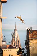 Monkey, Varanasi, Uttar Pradesh, India