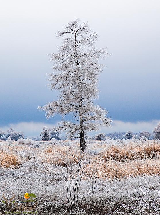 Single tree with frozen rain in rice-field with dark storm sky